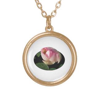 Palidezca - Lotus rosado Grimpolas