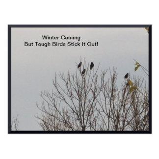 Palillo duro de los pájaros él hacia fuera postal