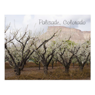 Palisade, Colorado Postcard
