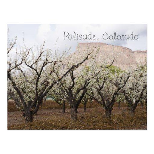 Palisade, Colorado Postcards