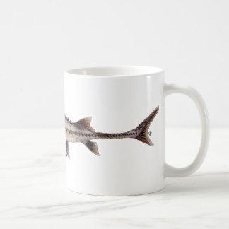 Pallid Sturgeon - Scaphirhynchus albus Mugs