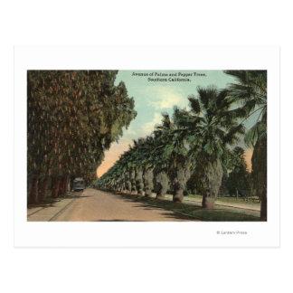 Palm and Pepper Trees Alongside Avenue Postcard