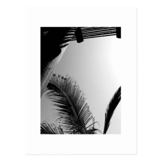 Palm and Post, Black and White Postcard