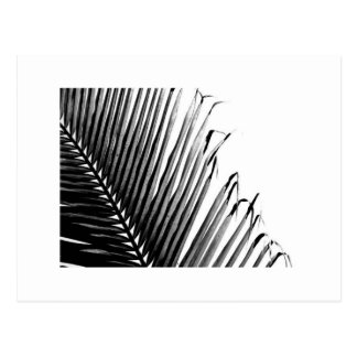 Palm, Black and White Postcard
