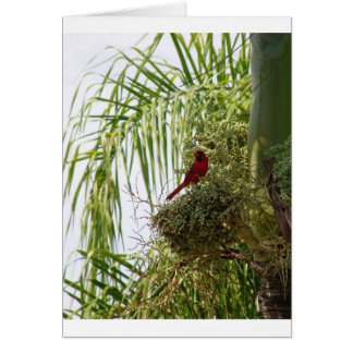 Palm Cardinal Greeting Cards