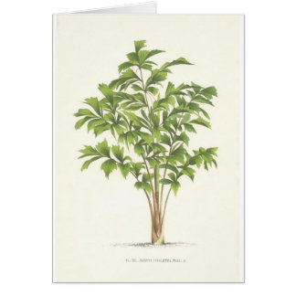 Palm collection - Drawing I Greeting Card