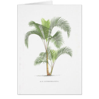 Palm collection - Drawing II Card