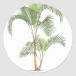 Palm collection - Drawing II Round Stickers