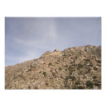 Palm Desert Photo Print