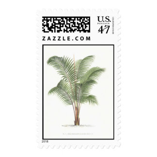 Palm Drawing Collection I Postage