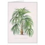 Palm drawings Collection Greeting Card