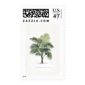 Palm drawings Collection Postage