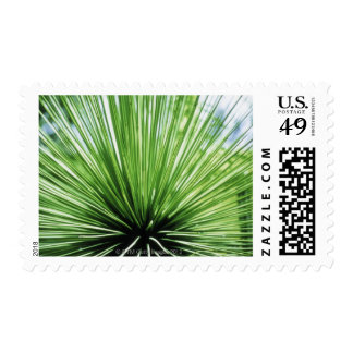 Palm frond, close up postage