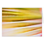 palm frond detail greeting card