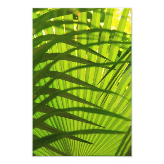 Palm Frond Layers, Landscape Pattern Abstract Photo Print