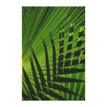 Palm Frond Print on Canvas