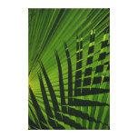 Palm Frond Print on Canvas Canvas Prints