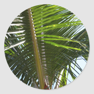 Palm Frond Too Classic Round Sticker