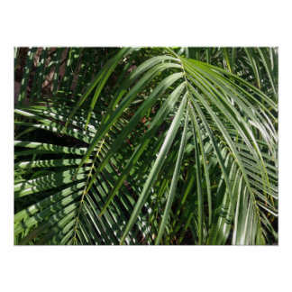 Palm Fronds Fine Art Nature Photography Poster