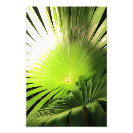 Palm Fronds in Sunlight, Tropical Landscape Photo Print