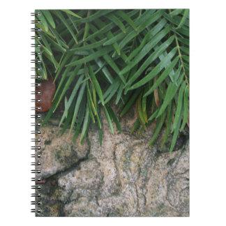 Palm fronds over rocks neat garden photo notebook