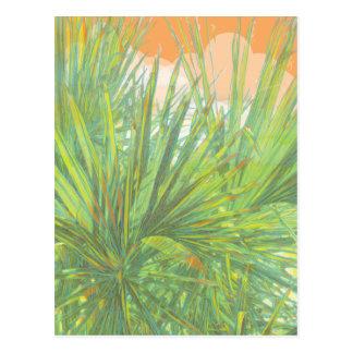 Palm Fronds Postcard