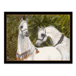 Palm Grove Arabian horse postcard