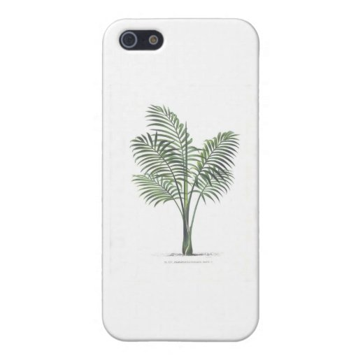 Palm illustration series - plate 6 covers for iPhone 5