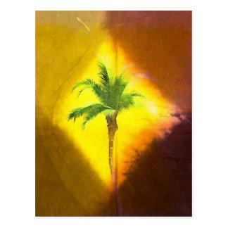 Palm in Focus Postcard