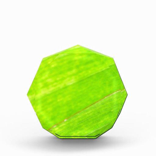 PALM LEAF 1618 LIGHT NEON GREEN NATURE VEGETATION ACRYLIC AWARD