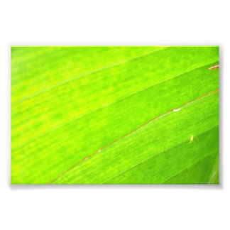 PALM LEAF 1618 LIGHT NEON GREEN NATURE VEGETATION PHOTO PRINT