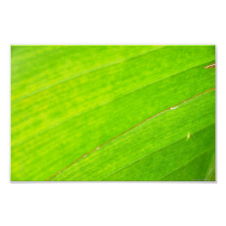 PALM LEAF 1618 LIGHT NEON GREEN NATURE VEGETATION POSTER