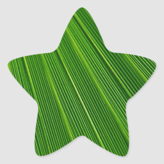 Palm Leaf Abstract Colorful Green Star Sticker