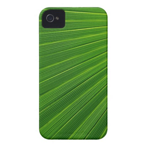 Palm Leaf Blackberry Bold Covers