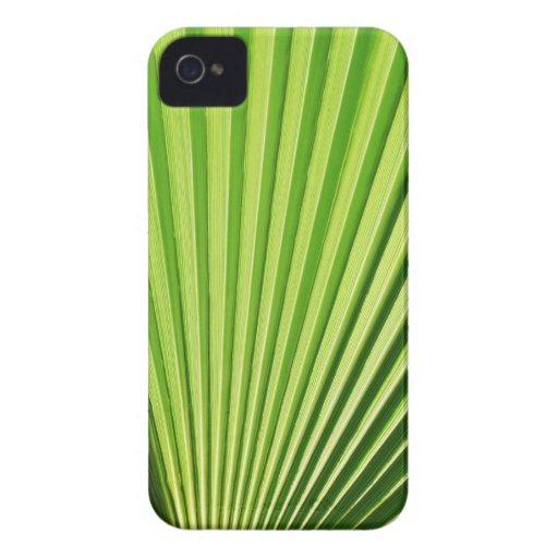 Palm leaf blackberry bold case