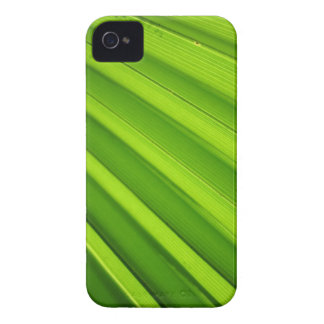 Palm Leaf Detail iPhone 4 Case-Mate Cases