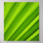 Palm Leaf Detail Poster