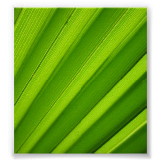 Palm Leaf Detail Poster
