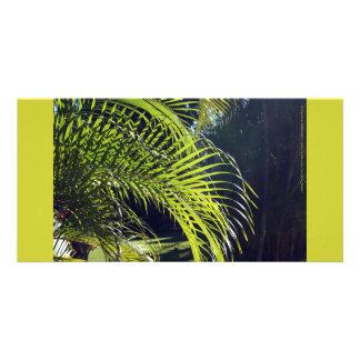 Palm Leaf Frond, Bucerias, Mexico Card