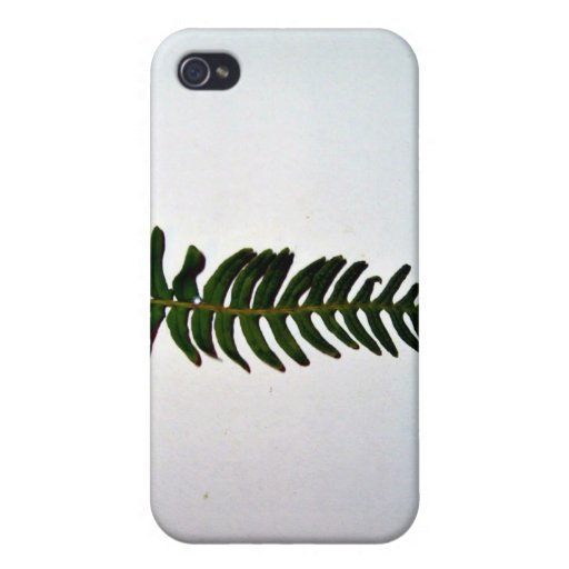 Palm leaf isolated on white background iPhone 4/4S cases
