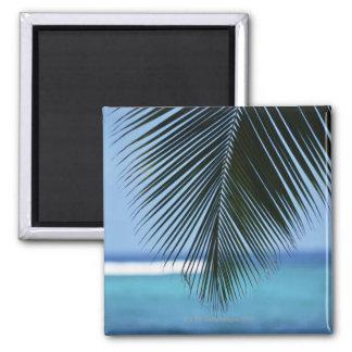 Palm leaf magnet