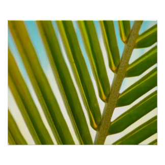 Palm Leaf Photo Poster