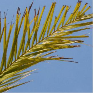 Palm Leaf Photo Sculptures