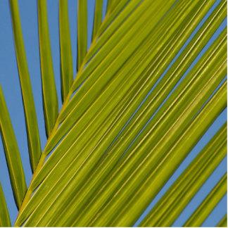 Palm Leaf Photo Cutouts