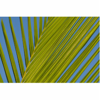 Palm Leaf Photo Cut Out