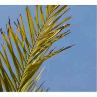 Palm Leaf Photo Cut Outs