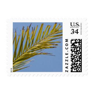 Palm Leaf Postage Stamp