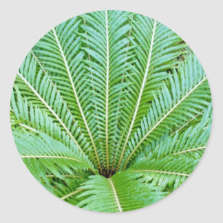 Palm Leaves Classic Round Sticker