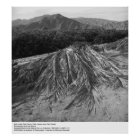 Palm Leaves near Palm Desert by Ansel Adams Poster