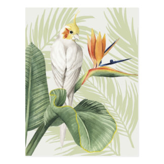 Palm Leaves With White Bird Postcard